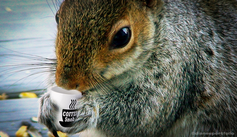 Squirrel Coffee Facts